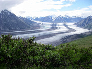 Arbustes de la région de Kluane, au Yukon.