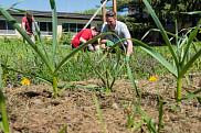 Le professeur Tristan Landry et ses &eacute;tudiants r&eacute;alisent un jardin ancestral &agrave; l'Universit&eacute; de Sherbrooke.<br>