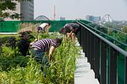 <span>Depuis quelques ann&eacute;es, un jardin communautaire fleurit chaque printemps sur l'Oasis du Campus de Longueuil.&nbsp;</span>