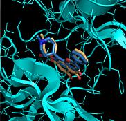 <span>Repr&eacute;sentation en trois dimensions d'un amarrage mol&eacute;culaire entre deux ligands et une prot&eacute;ine</span>
