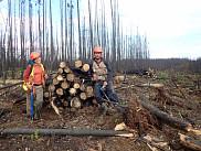 Charlotte Smetanka, étudiante à la maîtrise, et Charles Cambier, stagiaire, sur le site du feu étudié, alors que la récolte des bois brûlés a débuté, août 2017