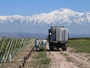 VignobleSoluna Wines, Argentine