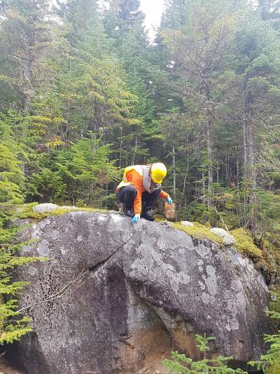 Marie Renaudin, étudiante auprès de Pr Jean-Philippe Bellenger et co-auteure de l'étude,, collecte du lichen dans le Nord québécois.
