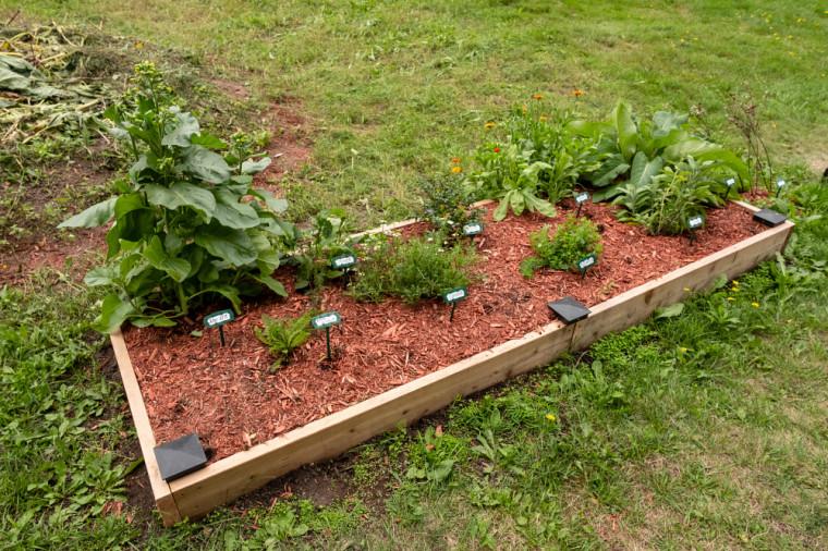 Le jardin historique de l'université compte désormais onze plantes médicinales.