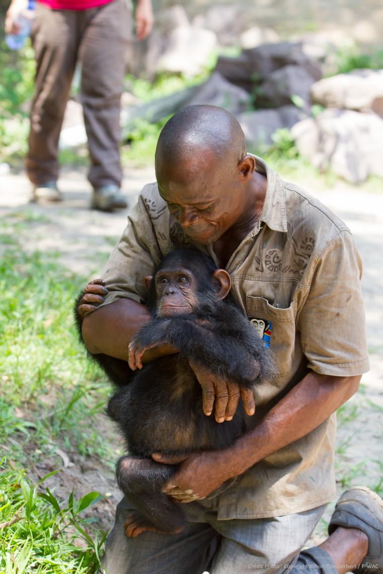 ISF protège les grands singes en Afrique (région du Mayumbe, située à l'ouest de la République démocratique du Congo)