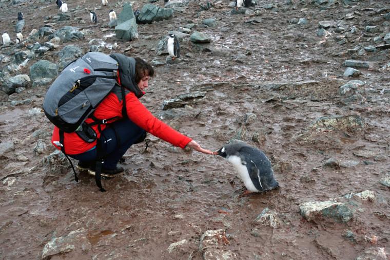 Le contact avec la faune reste le moment fort de l'aventure pour Émilie: «En Antarctique, les animaux ne craignent pas l'humain.»