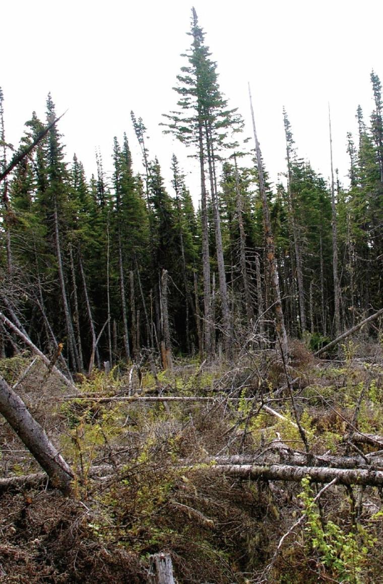 Dans l'un des projets, la télédétection a été employée pour mieux comprendre la dynamique des des zones de chablis sur les îles de la Réserve du parc national du Canada de l'Archipel-de-Mingan.