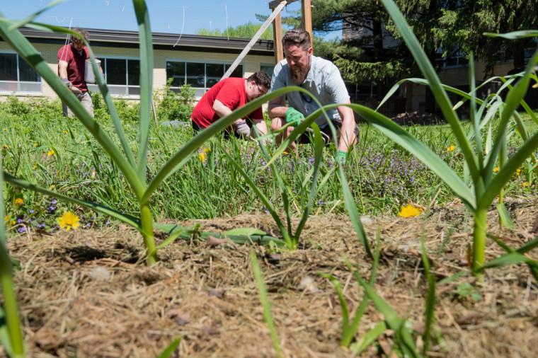 Le professeur Tristan Landry et ses étudiants réalisent un jardin ancestral à l'Université de Sherbrooke.