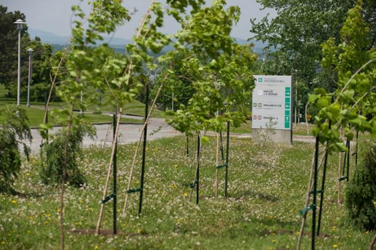 Plusieurs membres de la communauté universitaire ont participé à la dernière plantation d'arbres au Campus principal.