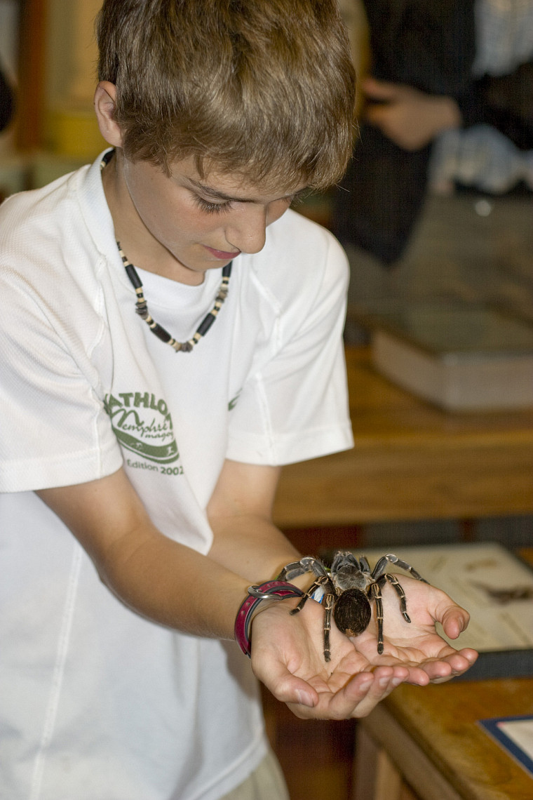 Une tarentule ne semble pas effrayer ce jeune homme sous l'objectif de son papa au Costa Rica.