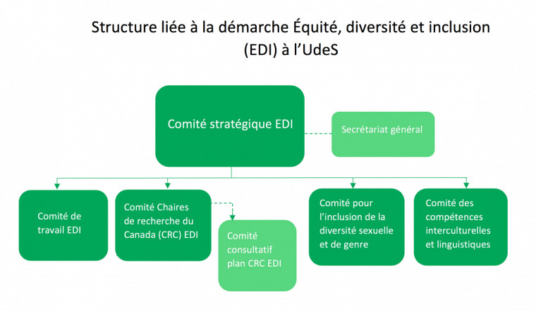 La structure liée à la démarche EDI à l'UdeS est représentée dans l'organigramme ci-dessus.