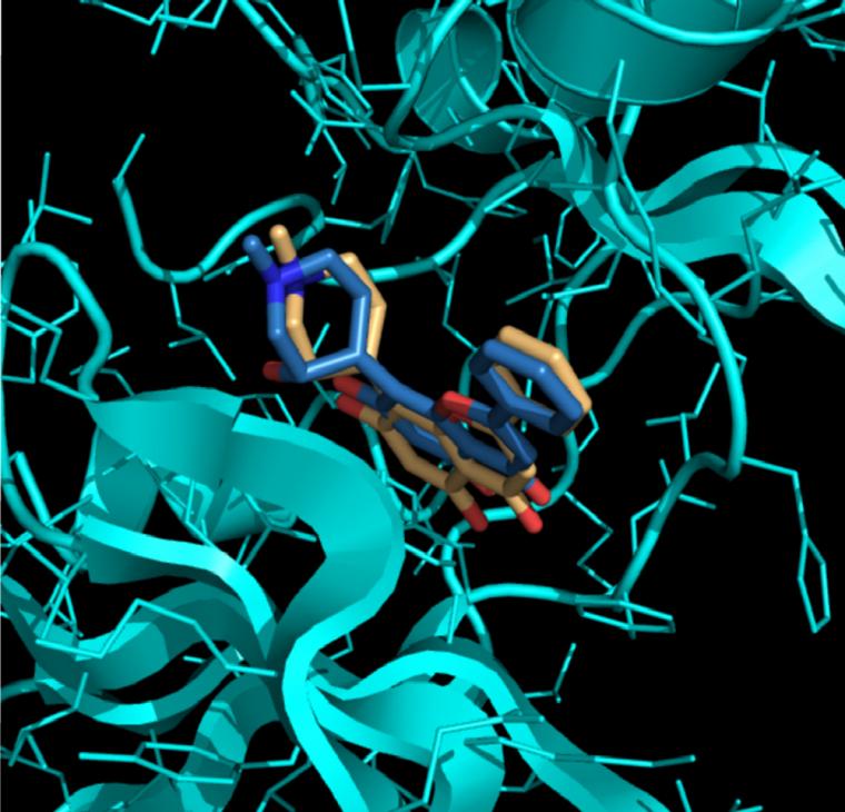 Représentation en trois dimensions d'un amarrage moléculaire entre deux ligands et une protéine