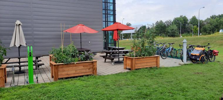 De nouveaux bacs de jardinage ont été installés cet été sur le terrain du 3IT.