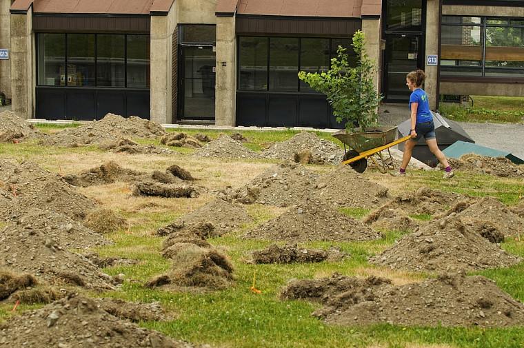Le terrain avait été préparé à l'avance pour accélérer la plantation des arbres.