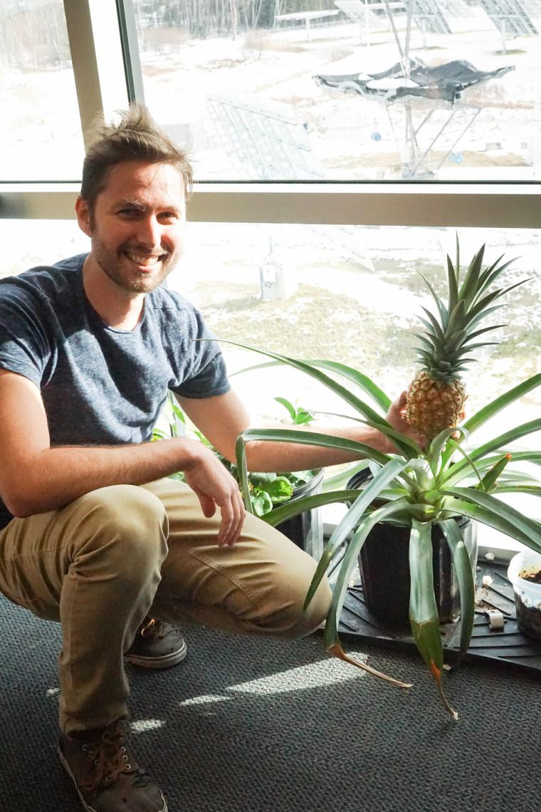 Philippe-Olivier Provost et le plant d'ananas qu'il entretient à son bureau!