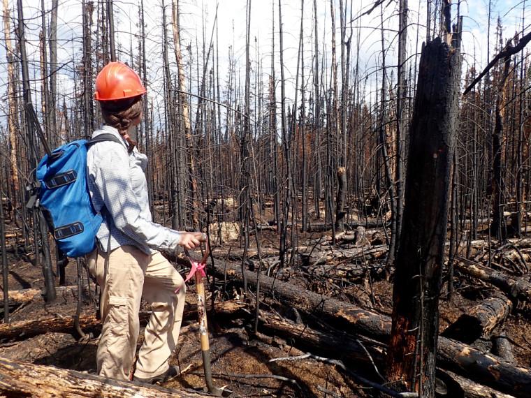 Charlotte Smetanka, sur le site du feu étudié, dans un secteur particulièrement carbonisé, juin 2017