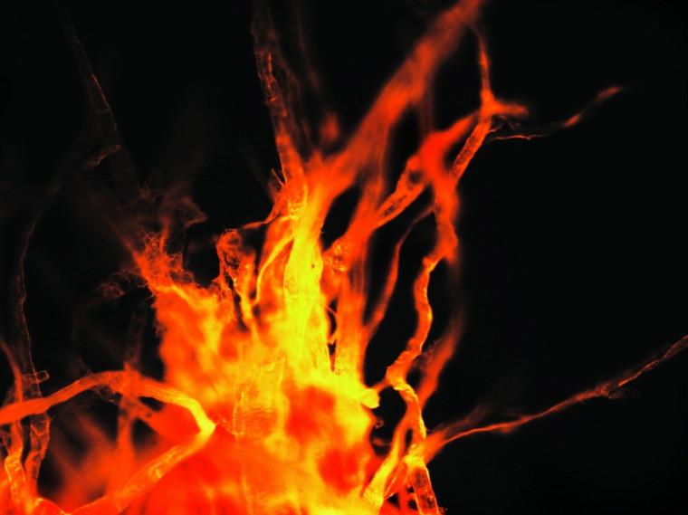 Difficile de croire que cette image n'est qu'une simple feuille de papier. La photo prise au microscope montre les fibres du papier imprégnées d'une substance fluorescente.