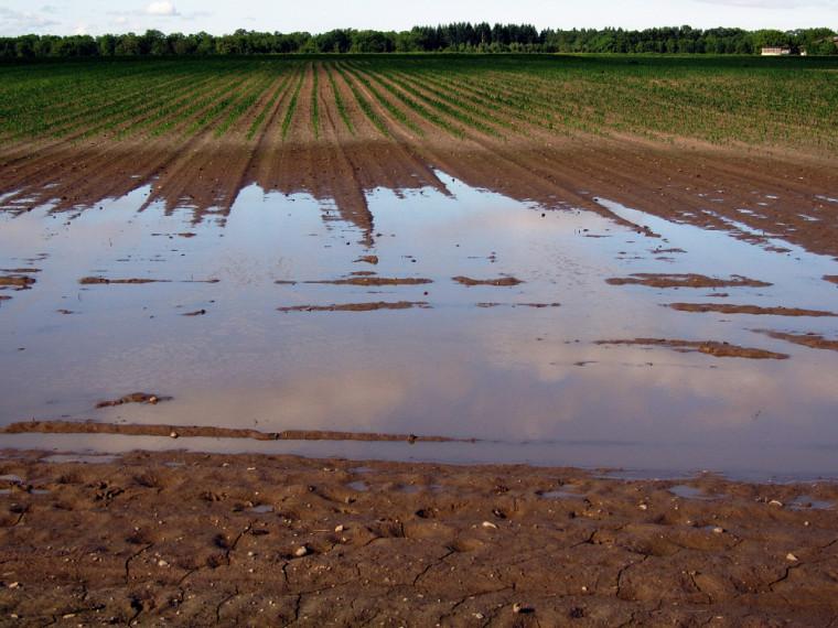 Les champs inondés sont une conséquence des changements climatiques.