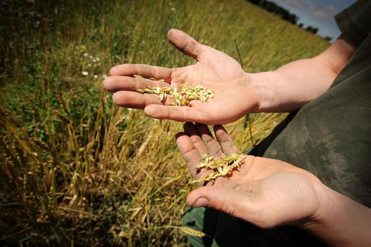 La relève agricole aura à faire des choix, notamment sur le type de culture qui sera le mieux adaptée aux changements climatiques annoncés.